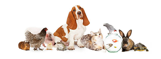 Group of Pets Together Over White stock photo