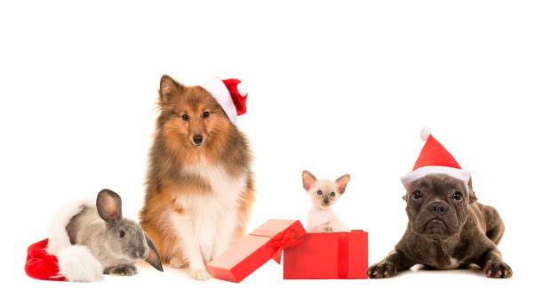 Group of pets two dogs cat and a rabbit with christmas hats on a picture id1250621426?b=1&k=6&m=1250621426&s=612x612&w=0&h=k532bt9zblb91 ubkxcypfuwhqnuxkigjcja6lp  s4=