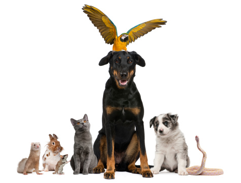 Portrait of group of pets in front of white background.