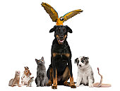 istock Group of pets, white background. 115797339