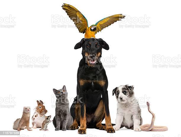 Group of pets white background picture id115797339?b=1&k=6&m=115797339&s=612x612&h=ezb23pbh4eogwfco3vtzfpx0ohzbbxvn 4qtixjvsrq=