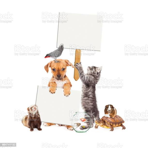 Group of pets with blank signs picture id664741132?b=1&k=6&m=664741132&s=612x612&h=govmsmd4ayigqln7fppovb82pvuxu o6zm4hyqgansg=