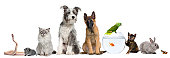 istock Group of pets with dog, cat, rabbit, ferret, fish, frog 157653996