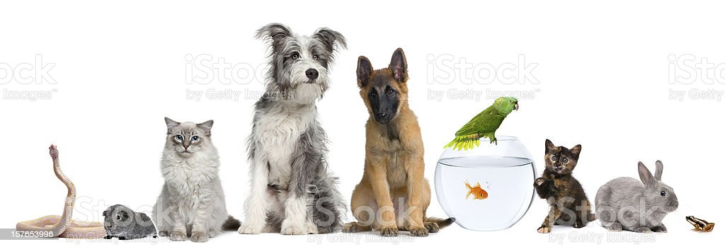 Group of pets with dog, cat, rabbit, ferret, fish, frog stock photo