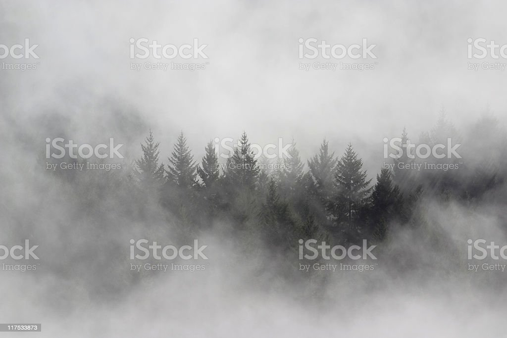 Group of pine trees in the middle surrounded by thick mist stock photo