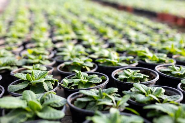 Gruppe von Pflanzen in Töpfen – Foto