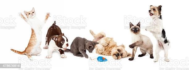 Group of playful cats and dogs picture id478626816?b=1&k=6&m=478626816&s=612x612&h=8sqkokl2ltxrwcnra3sbmze8fzmimx hwuhmxqmjvja=