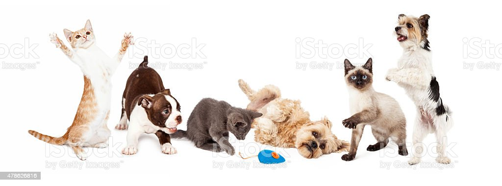 Group of Playful Cats and Dogs stock photo