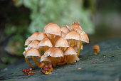 Poisonous mushrooms on green background