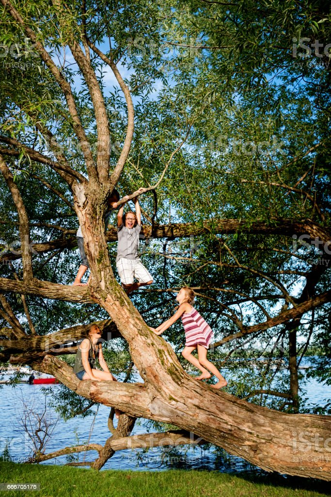 Group of preteen children climbing big tree in summer. stock photo