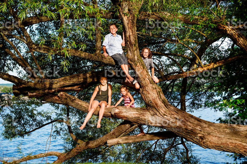 Group of preteen children playing on big tree in summer. stock photo