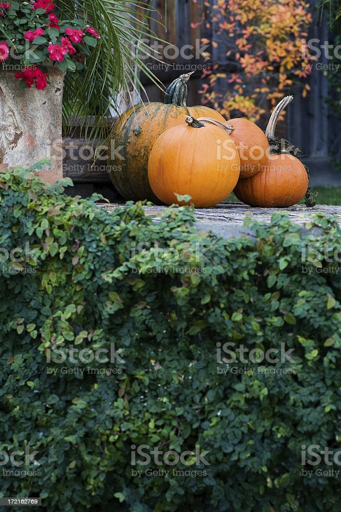 Group of pumpkins on a porch with plants surrounding it. royalty-free stock photo