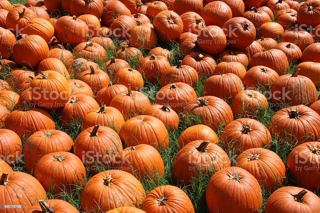 Group of Pumpkins royalty-free stock photo