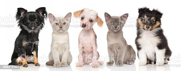 Group of puppies and kittens on white picture id488318354?b=1&k=6&m=488318354&s=612x612&h=gm5yg rbnwf0yopqh5nxfello55kif8yzsu7fbzh8oi=
