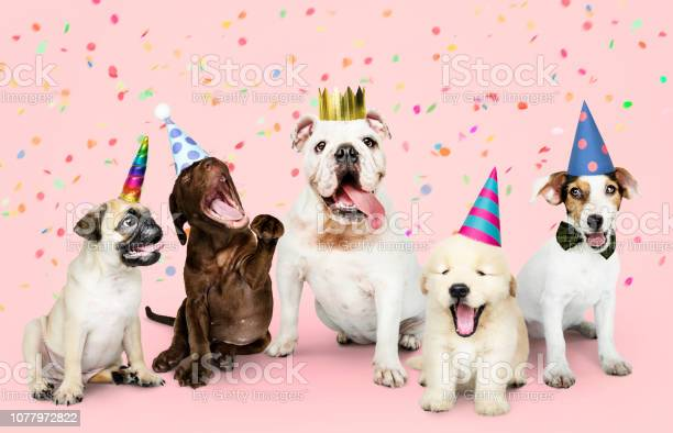 Group of puppies celebrating a new year picture id1077972822?b=1&k=6&m=1077972822&s=612x612&h=zgrjkokbm jg9ebdcadfbftbcgajdmdf2mogwtvyxko=