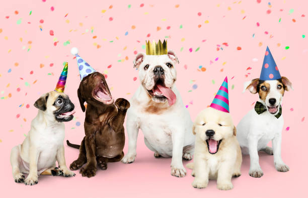 Group of puppies celebrating a new year stock photo