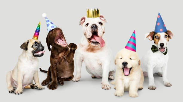 Group of puppies celebrating new year together stock photo