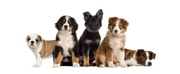 group of puppies sitting in front of a white background - puppy stock pictures, royalty-free photos & images