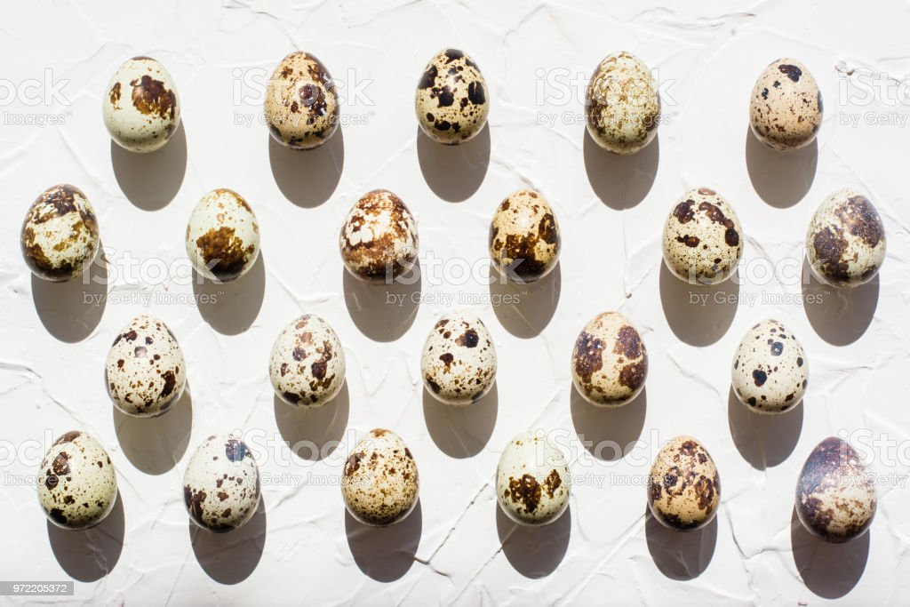 Group of quail eggs laid out evenly in rows in sunlight with hard shadows stock photo