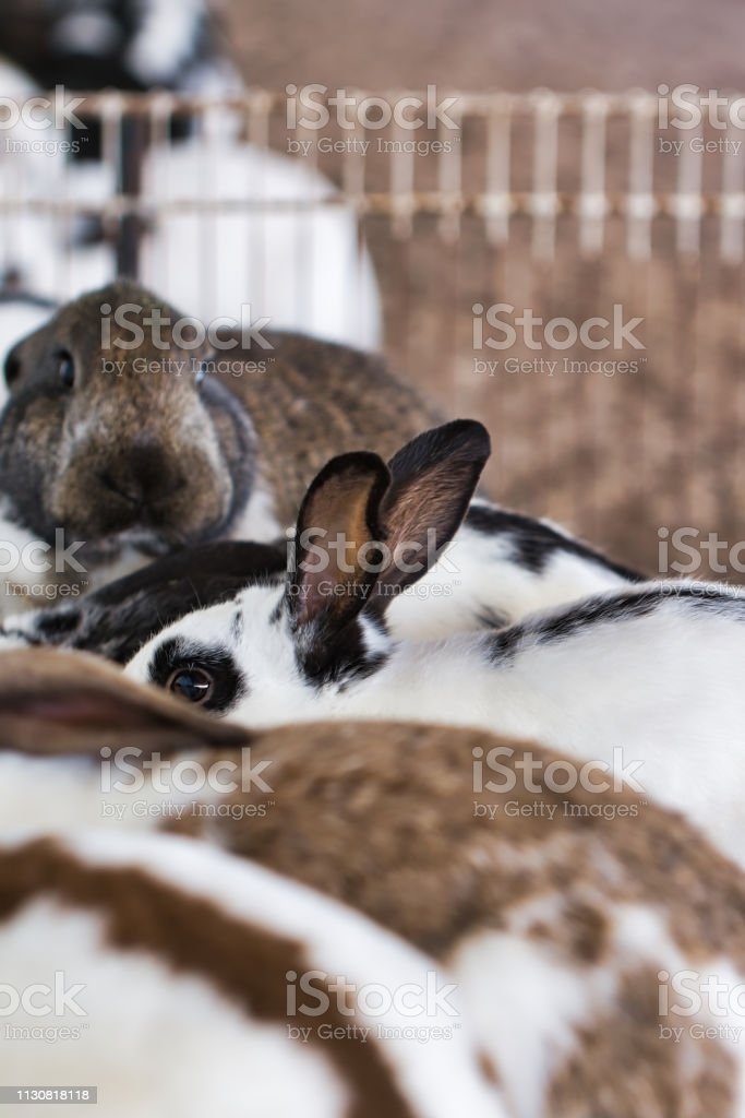 Close-up of a group of rabbits in an animal pen at a petting zoo