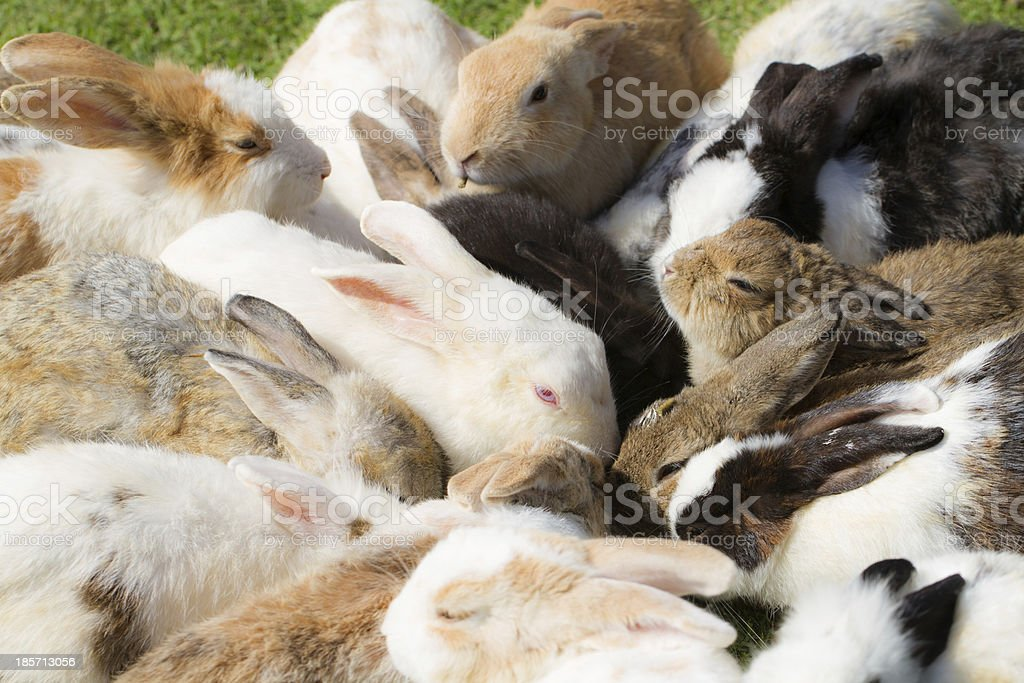 Group of rabbits royalty-free stock photo