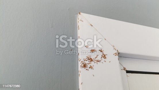 group of red ants on wall