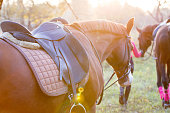 istock Group of rider girls walking with horses in park 928576928