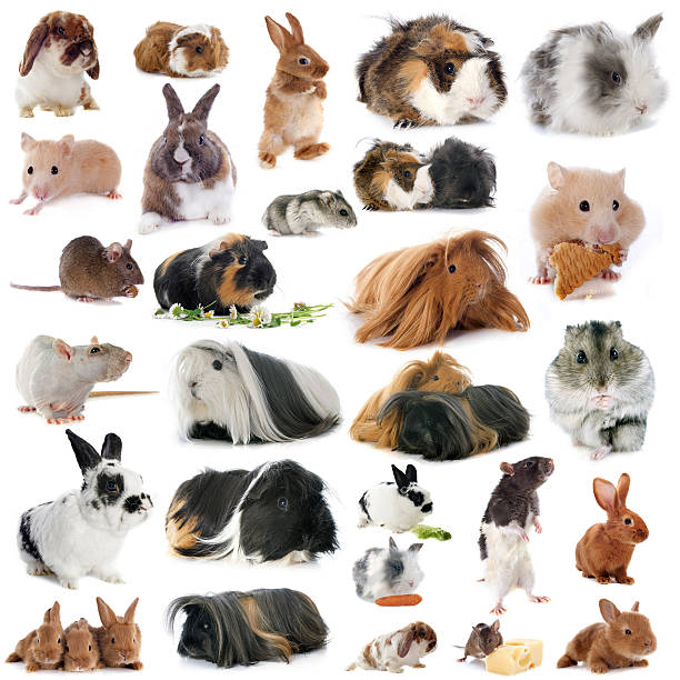 group of rodents stock photo