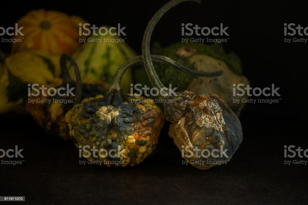 Group of rotting gourds stock photo