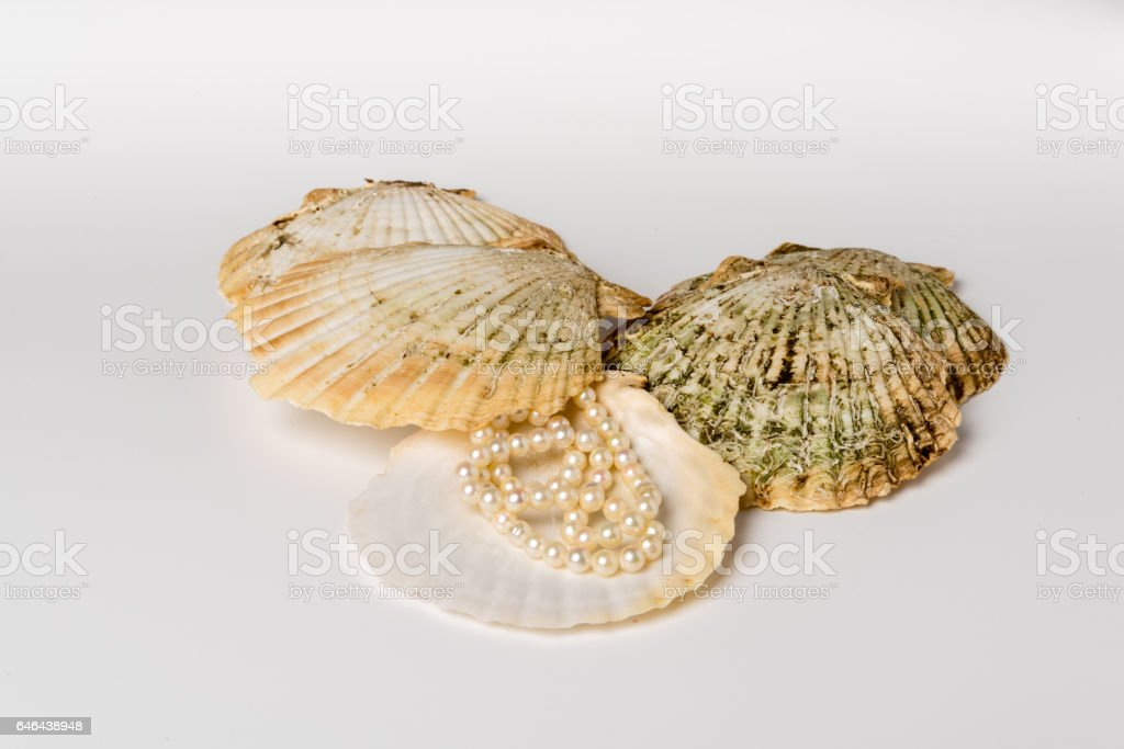 Group Of Scallop Shells With Pearl Necklace Stock Photo More