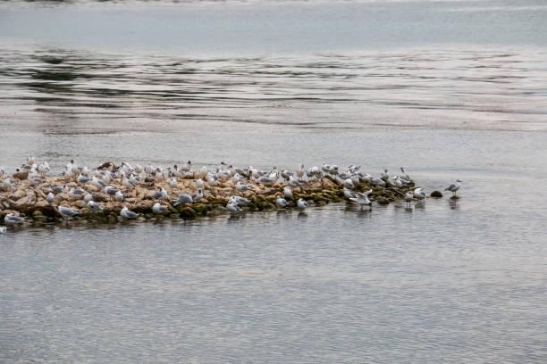 Gruppe von Seemews in der Nähe des Sees – Foto