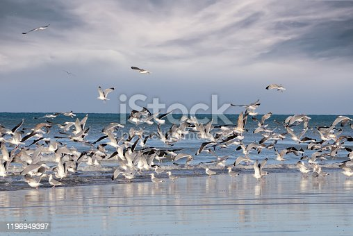 group of seagulls flying away