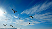 Close up flock of seagulls flying over blue sunny sky