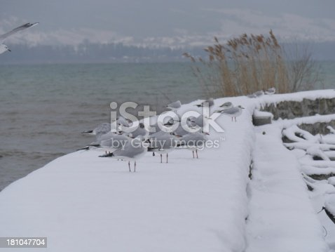 istock group of seagulls on snowy pier 181047704