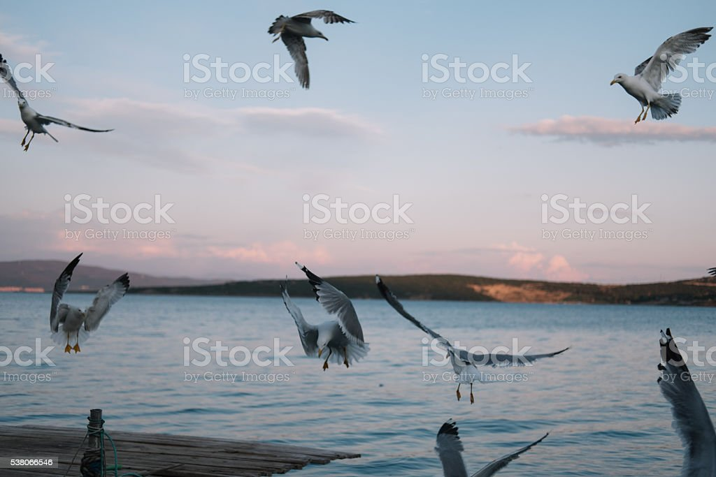 Group of seagulls stock photo