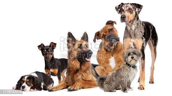 istock Group of six dogs 1175747279