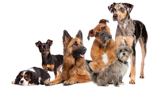 altı köpekgrubu - safkan köpek stok fotoğraflar ve resimler