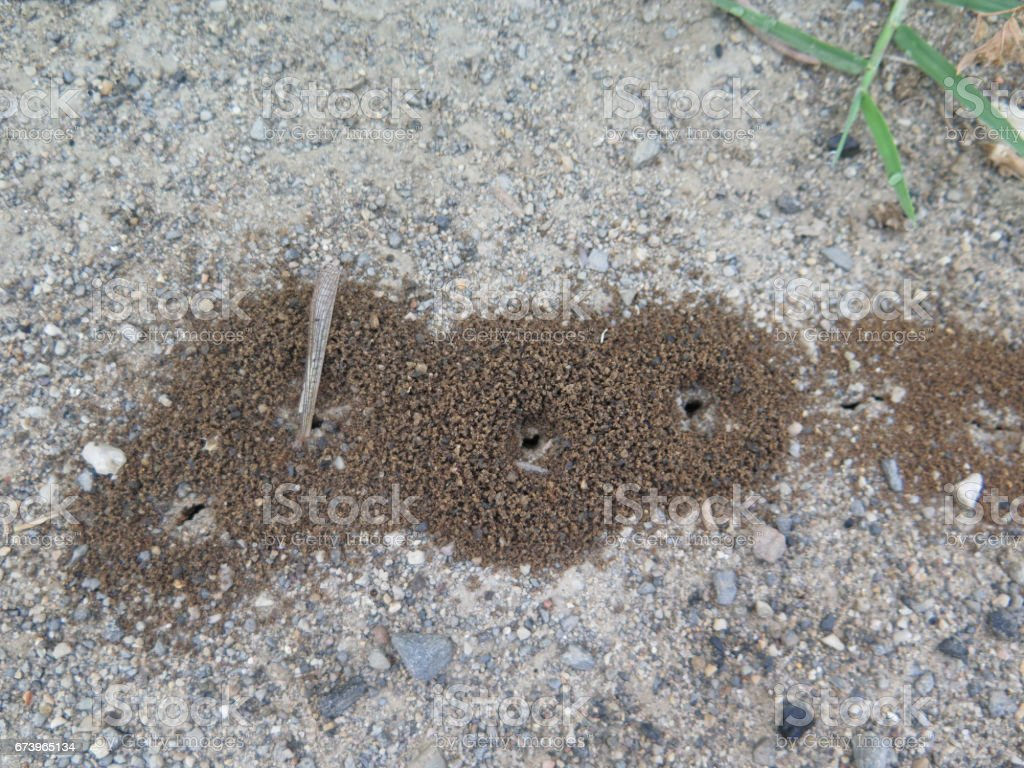 Group of small Ant holes royalty-free stock photo