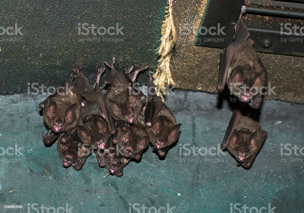 Group Of Small Bats stock photo