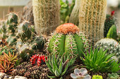 Group of small cactus plant in the cactus garden