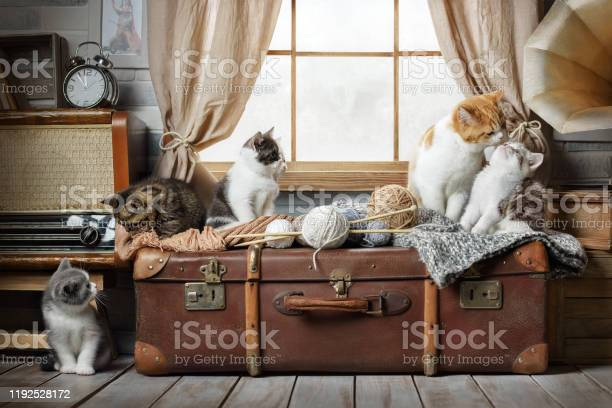 Group of small striped kittens on a suitcase by the window picture id1192528172?b=1&k=6&m=1192528172&s=612x612&h=kllijinc05ohy2c3h8ozkiulzyimqbsryax8c18lwz0=