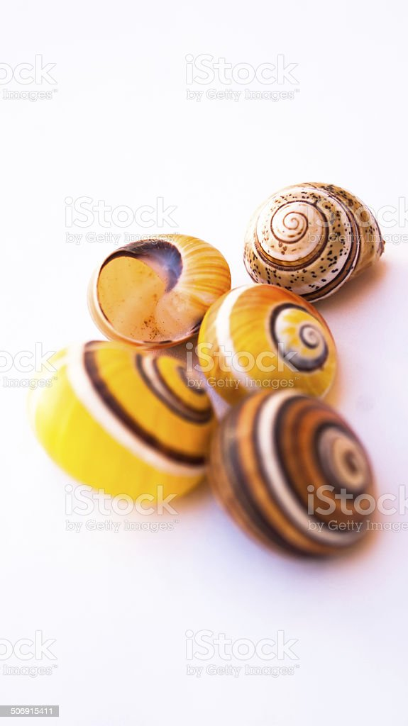 group of snails 2 stock photo