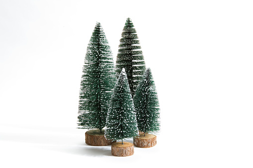 group of snow firs