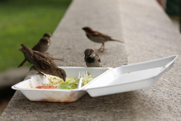 group of sparrow birds eats from dirty plastic lunch box with leftovers after lunch - desperdício alimentar imagens e fotografias de stock