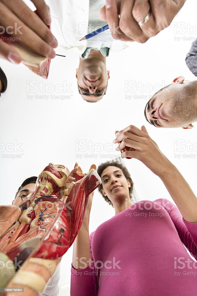 Group of students having anatomy class, low angle view royalty-free stock photo