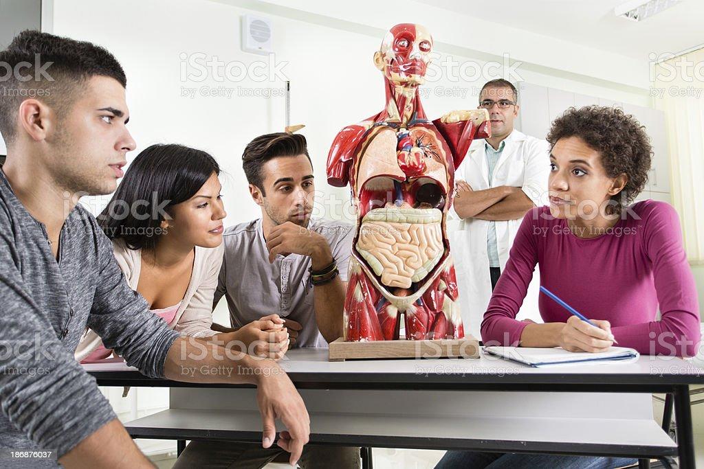 Grupo De Estudiantes Que Tienen Anatomía Clase - Fotografía de stock ...