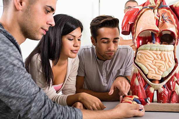 Group Of Students On Anatomy Class stock photo   iStock