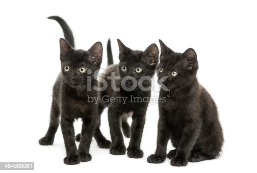 824824466 istock photo Group of three Black kittens looking in the same direction 464593061