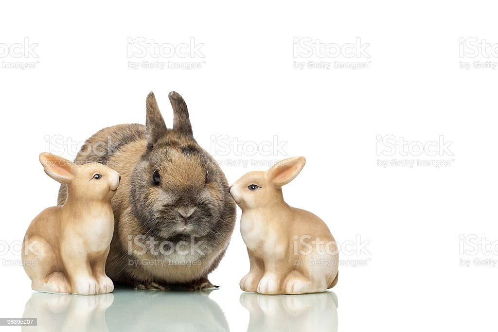 Group of three cute Easter bunnies sitting together royalty-free stock photo
