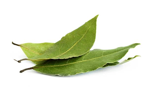 Group of three fresh bay leaves Bay leaves isolated over white background bay leaf stock pictures, royalty-free photos & images